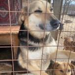 Приютам для бездомных животных в Пензенской и Псковской областях передали корм и лекарства