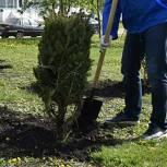 Кто и как должен озеленять дворы многоквартирных домов? Разъясняет Александр Козлов