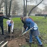 Волонтеры «Единой России» помогли озеленить сквер на улице Декабристов