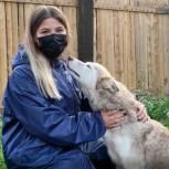 Акции во Всемирный день бездомных животных прошли по всей стране