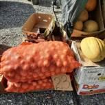 Активисты Приютненского местного отделения Партии проверили стоимость сезонных овощей в магазинах и на ярмарках