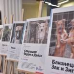 В Штабе общественной поддержки «Единой России» проходит фотовыставка в поддержку бездомных животных