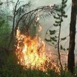Тимофей Баженов прокомментировал инициативу Рослесхоза по борьбе с лесными пожарами