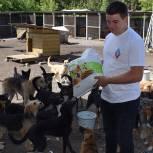 При поддержке сторонников «Единой России» помощь получил 31 приют для животных