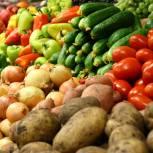 На площадке «Единой России» предложили новые меры по снижению цен на сезонные овощи