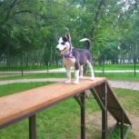 Евгений Нифантьев заявил о нехватке площадок для выгула собак в Москве