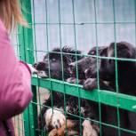 Активисты единого волонтерского штаба запустили акцию «Лучший друг» – она приурочена ко Всемирному дню бездомных животных