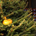 Мытищинские волонтеры вручили врачам округа полтонны мандаринов и ёлку