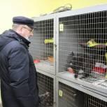 Депутаты Ивановской городской Думы привезли в приют «ЗОО 37» две тонны корма для животных