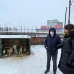 Дмитрий Хубезов поддержал городскую службу по контролю за безнадзорными животными