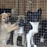 Федеральный закон об обращении с животными надо адаптировать к арктическим территориям – Сергей Коткин