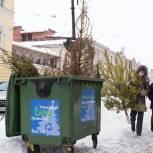 Ольга Щетинина: «Мы можем правильно утилизировать елки, сделав нашу область экологичнее, и помочь животным»