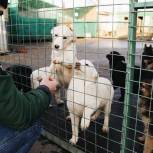 Минприроды поддержало инициативу «Единой России» о строительстве приютов для животных за счет софинансирования из федерального бюджета