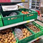 Владимир Дмитриев отметил снижение цен на овощные культуры