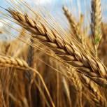 В народную программу «Единой России» войдут предложения по эффективному использованию сельхозземель