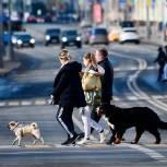 Фракция «Единой России» внесет в Госдуму до конца лета пакет инициатив по защите животных