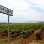 В 2021 году на Кубани запланировано заложить еще 1,7 тыс. га молодых виноградников