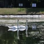 В московском парке «Сокольники» после благоустройства открылся Золотой пруд