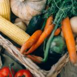 Фермерским хозяйствам и СПК предоставят новые возможности для развития