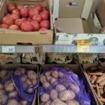 «Народный контроль» проверил наличие и цену овощей из «борщевого набора» в сетевом магазине Пятерочка