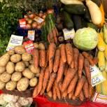 «Народный контроль» провел мониторинг цен на продукты «борщевого набора» в Подмосковье