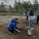 Омсукчанские активисты продолжают обустройство нового семейного сквера «Зеленый остров»