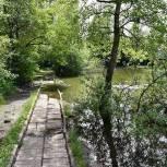 Единороссы Балашихи обсудили с жителями мкр Ольгино благоустройство пруда на улице Главной
