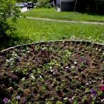 Депутат помог озеленить дворы на  западе Москвы