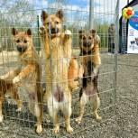 Алексей Ситников передал корм приюту для бездомных животных Салехарда