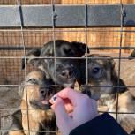 «Единая Россия» против убийства бездомных животных
