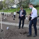 Единороссы высадили яблони в «Саду Победы» в Брянске