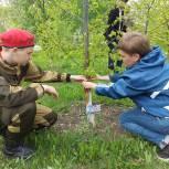 Активисты партии «Единая Россия» в поселке Светлый высадили саженцы деревьев в память о Героях Великой Отечественной Войны