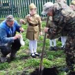 Плодовые деревья и многолетние цветы высаживают у домов участников Великой Отечественной войны