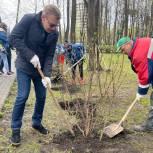 В рамках акции «Сирень Победы» единороссы северо-востока озеленили Бабушкинский парк