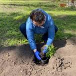 Елена Митина помогла в восстановлении видового разнообразия Ерлинского парка-дендрария