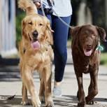 Владимир Путин подписал закон «Единой России» о запрете изымать домашних животных за долги