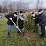 В парке Новой Москвы высадили 85 деревьев
