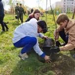 """В Пермском районе посадили деревья в рамках акции """"Зелёный щит"""""""