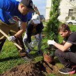 Щелковские единороссы высадили деревья в рамках партпроекта «Чистая страна»