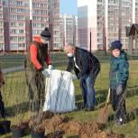 В Московском микрорайоне высадили 70 кустов кизильника