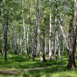 Белоусов: Реформирование системы управления лесным хозяйством – назревшее и своевременное решение