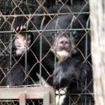 Полтонны корма для осиротевших медвежат передали хабаровские единороссы в центр для диких животных