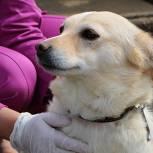 В Госдуме поддержали законопроект «Единой России» о штрафах за выброшенных животных