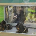 Комитет Госдумы поддержал законопроект «Единой России» о запрете продажи животных в зоомагазинах и на рынках