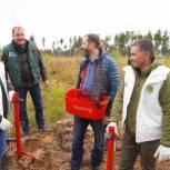 Игорь Кобзев: Мы должны сохранить лидирующие позиции по лесовосстановлению