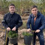 Партийцы посадили сосны на месте горельников в чебоксарском Заволжье