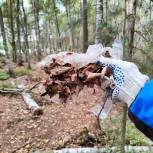 В Рязанском районе прошел экологический марафон «Дни зеленых действий»