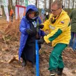В Коряжме состоялась акция «Сохраним лес»