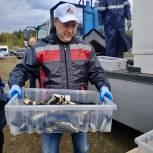 Депутат Александр Серебренников участвовал в акции - зарыблении Мариинского пруда