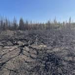 «Единая Россия»: Средства на борьбу с лесными пожарами значительно усилят систему лесоохраны